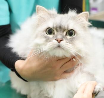 鹿児島市 動物病院Yuka犬と猫のギャラリー画像01