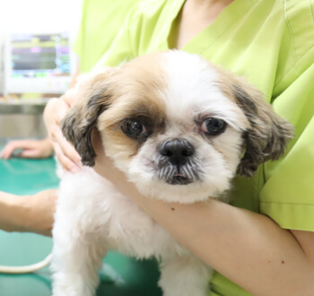 鹿児島市 動物病院Yuka犬と猫のギャラリー画像02