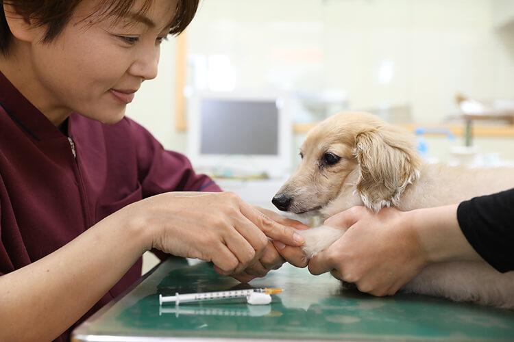 鹿児島市 動物病院 yuka犬と猫のクリニック 鍼治療:犬