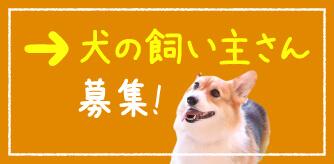 犬の飼い主さん募集
