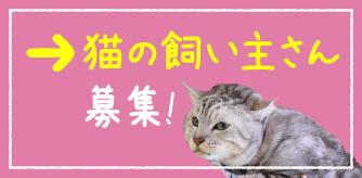 猫の飼い主さん募集